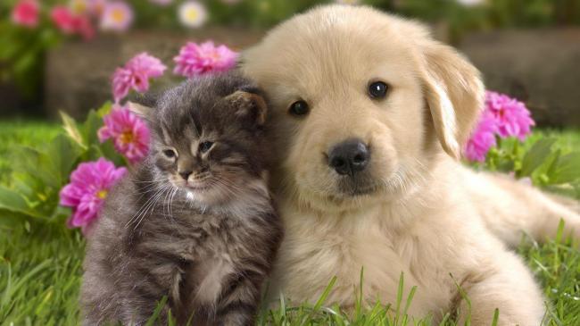 关于动物互相帮助的童话谁有?要是小学生五年级的