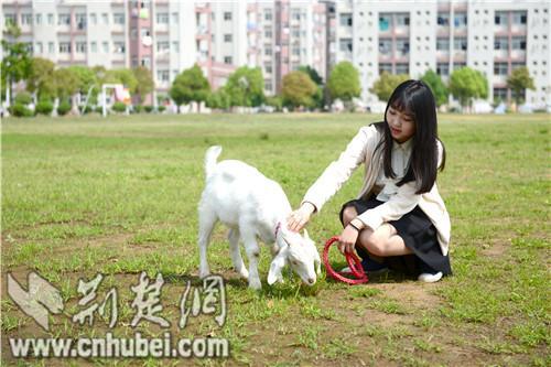 武汉纺大美女张宇宁校园遛羊网上爆红马卡美女图片吃酒图片