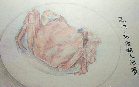 手绘江苏美食走红 彩铅手稿形象逼真勾味蕾(组图)