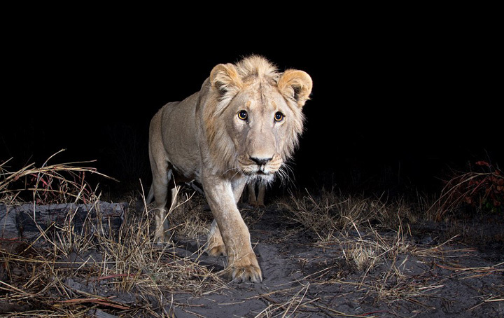 旨在呼吁保护野生动物