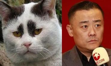 王思聪撞脸树懒 揭明星与动物爆笑大撞脸(组图)