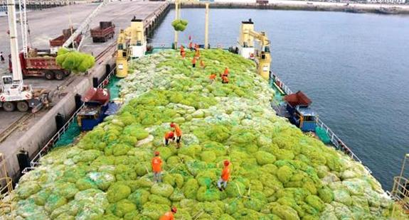 """青岛:打""""浒""""战役打响 已清理浒苔超7万吨"""