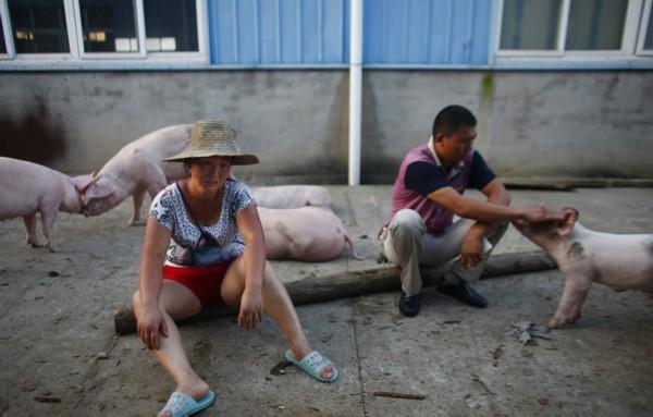 湖北孝感一养猪场被淹 养殖户抱着小猪痛哭