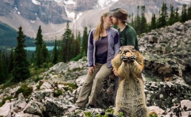 订婚照遭松鼠抢镜成亮点 为情侣带去无穷乐趣