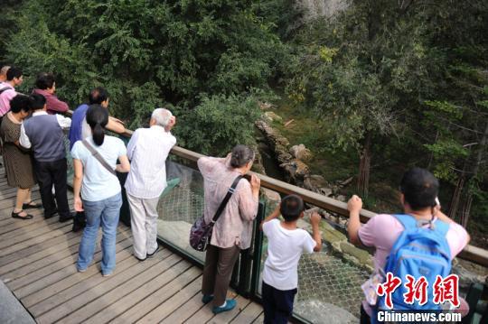 长春动物园东北虎遭群虎围攻致死