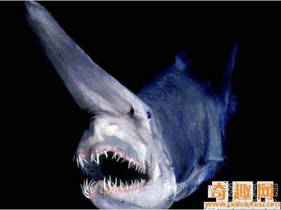 世界上最恐怖动物 远古时期就存在