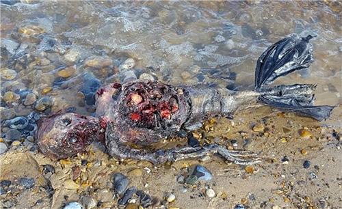 海滩惊现不明生物尸体 过程曝光竟是如此诡异 传说中的海怪终于现身了? http://www.hxw163.com/2016/huati_1008/1067727.html