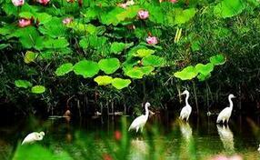 微山湖湿地被授予中国慢生活休闲体验区称号(图)