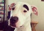 为狗狗画眉 画面太美