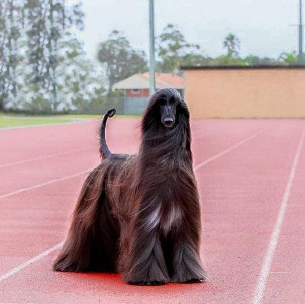 围观世界上最漂亮的狗