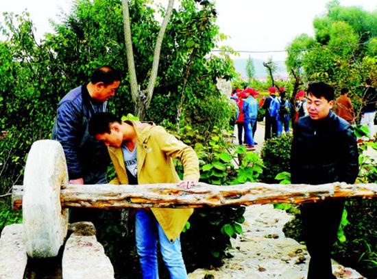 枣庄薛城区陶庄镇呈现绿色生态发展品牌效益(图)