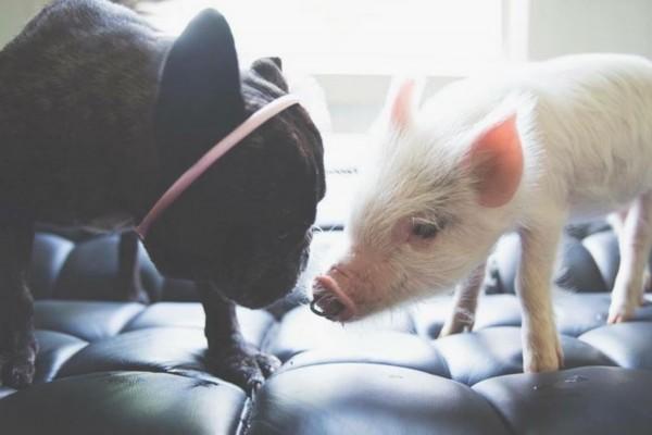 """Alissa表示:""""Olive几乎无时无刻不和小狗们在一起,它们一同玩耍一同睡觉。"""""""