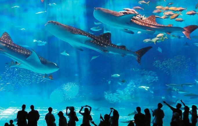 我国海洋主题公园消费热潮涌动(图)