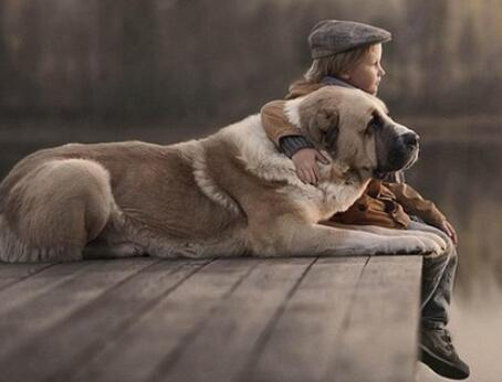 """宠物离世可休丧假 """"宠物丧假""""的暖心让很多铲屎官感动"""