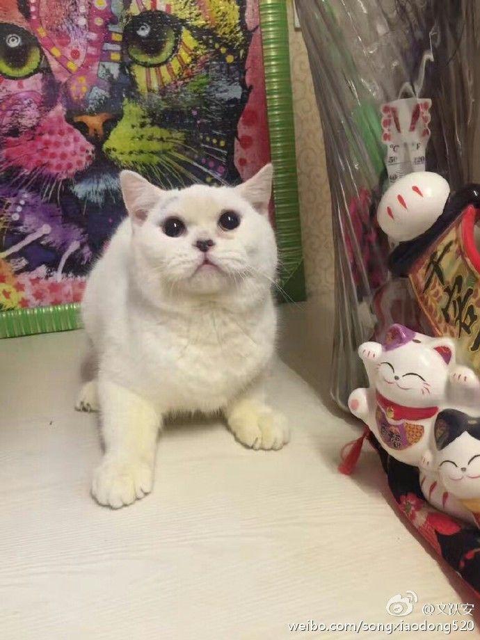 恐怖!买猫反悔丢宠物店 还把小猫剥皮了(组图)