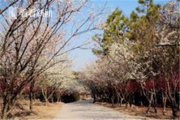 仙齐聚共青森林公园