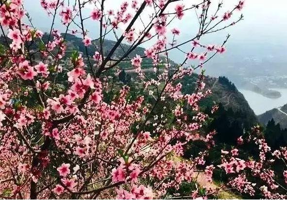 """奉节县鹤峰乡漫山桃花、李花、梨花竞相开放,为大山穿上了绚丽的""""彩衣""""。想必追过《三生三世十里桃花》的都迷醉于粉红的桃花中,在这里你也可以与爱人许下三生三世的诺言,每一片桃花瓣都是最美的证言。"""
