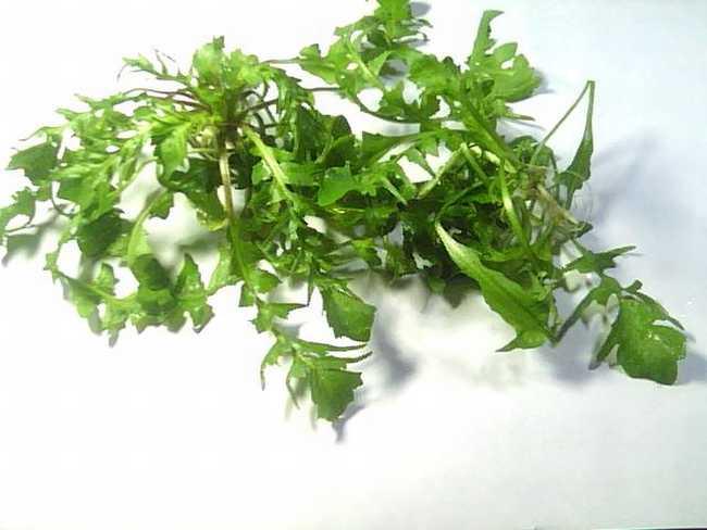 荠菜来源于十字花科荠菜属植物荠.,以全草带花,籽入药.
