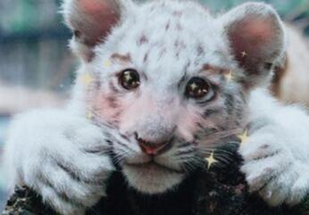 """动物遇上美颜相机 """"化妆""""后的它们更加萌萌哒(组图)"""