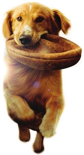 引来中国小动物保护协会强烈谴责;2014年