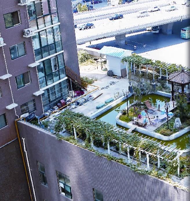 市民楼顶上建花园 面朝都市也可春暖花开 图