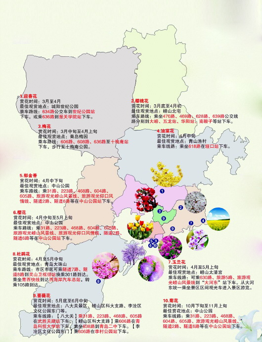 青岛温馨巴士推出赏花路线图