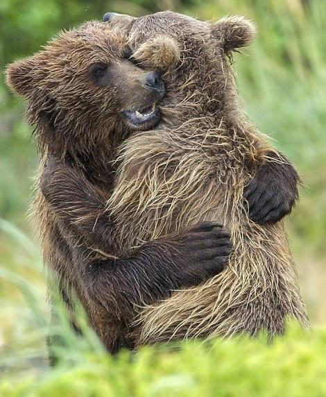 美失散熊崽兄妹重逢后紧紧相拥爱意爆棚
