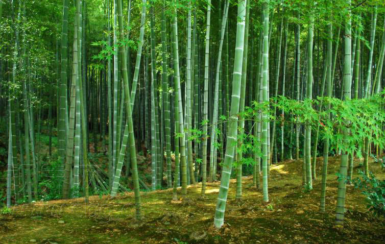 微信春天绿色风景图片