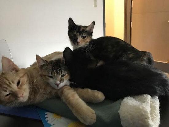 流浪猫成兽医院护士 安慰小动物画面超有爱