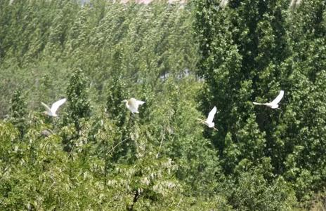 响水崖子大舞台广场 高崖库区仙月湖风景区   这里湖水清澈,白鹭纷飞