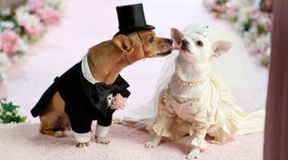 """市民为狗办婚礼 交换的""""婚戒""""居然是这个"""