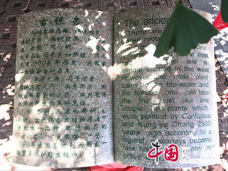"""安丘城顶山""""天下第一夫妻树"""" 吸引情侣合影(图)"""
