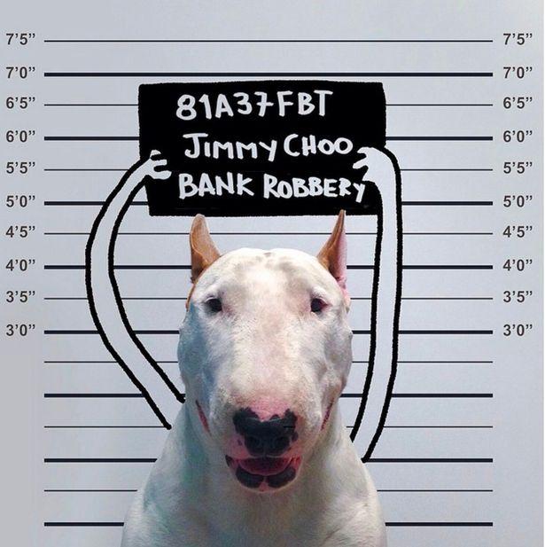 赞!艺术家为爱犬拍摄逗趣插画照片