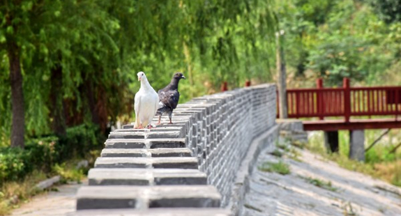 """曲阜""""民俗风情小镇""""花韵靓景扮美文化国际慢城"""