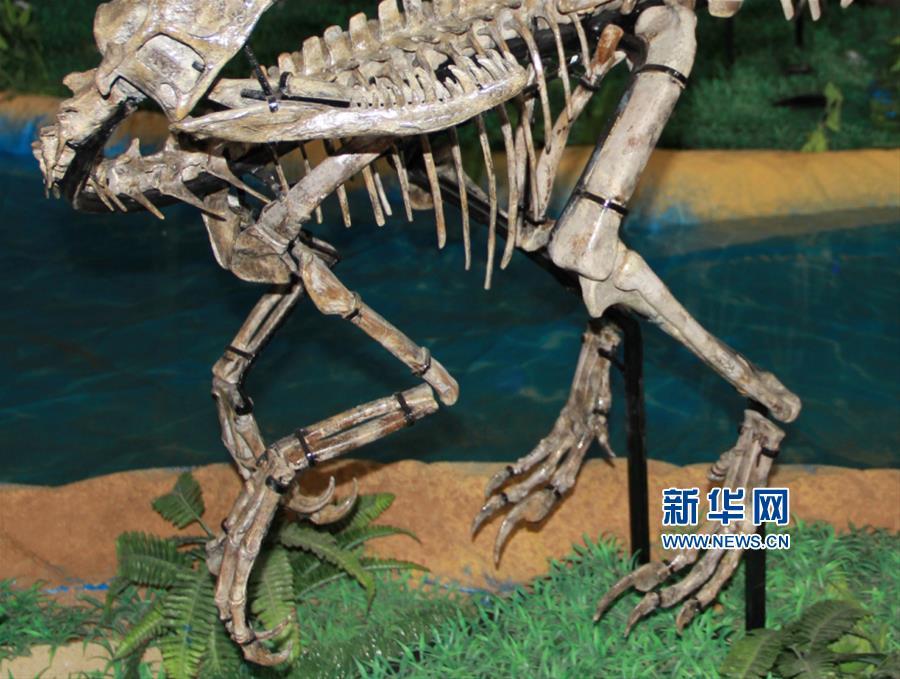 """山东诸城发现小型兽脚类恐龙""""赵氏怪脚龙"""""""