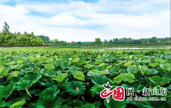 首届中国临沂红荷节7日在罗庄开幕 持续至7月15日