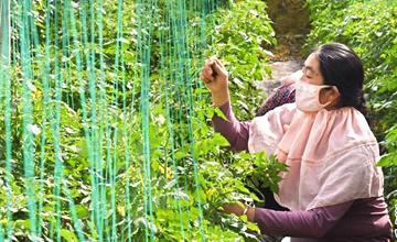 山東平度:特色種植助力鄉村振興